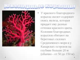 У красного благородного коралла скелет содержит окись железа, которая придает