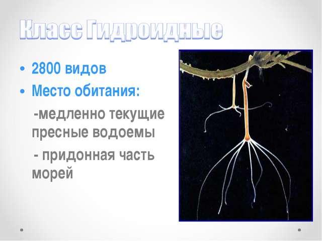2800 видов Место обитания: -медленно текущие пресные водоемы - придонная част...