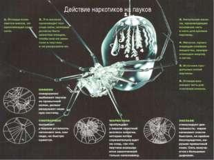 Действие наркотиков на пауков