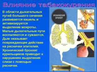 В области дыхательных путей большого сечения развивается кашель и активизируе