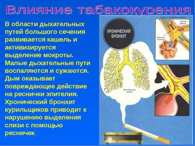 В области дыхательных путей большого сечения развивается кашель и активизируе...