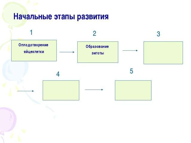 Начальные этапы развития Оплодотворение яйцеклетки Образование зиготы 1 2 3...