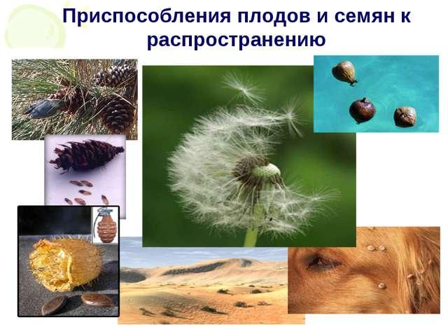 Приспособления плодов и семян к распространению