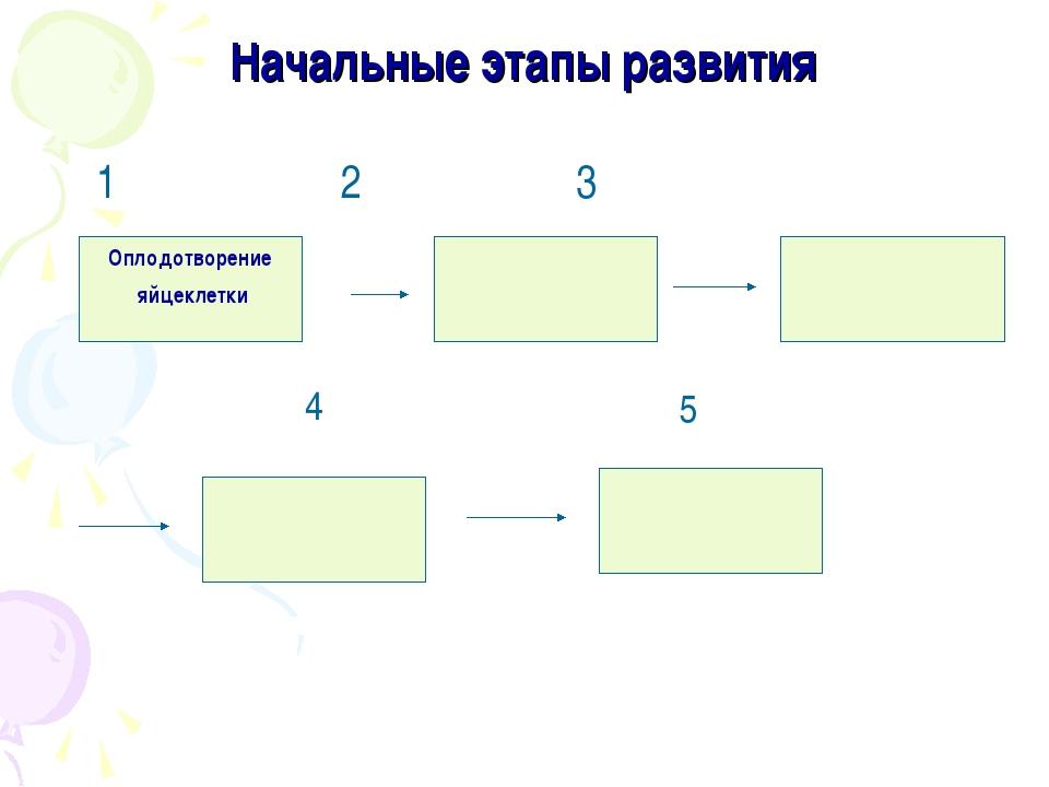 Начальные этапы развития 1 2 3 Оплодотворение яйцеклетки 4 5