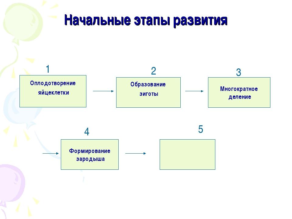 Начальные этапы развития Оплодотворение яйцеклетки Формирование зародыша Обра...