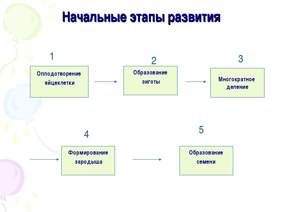 Начальные этапы развития Оплодотворение яйцеклетки Образование семени Формиро...