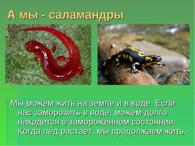 А мы - саламандры Мы можем жить на земле и в воде. Если нас заморозить в воде...
