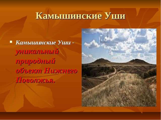 Камышинские Уши Камышинские Уши - уникальный природный объект Нижнего Поволжья.