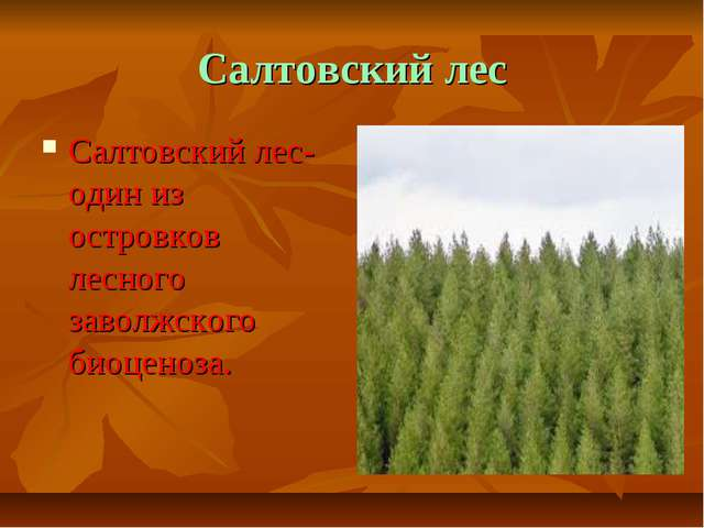 Салтовский лес Салтовский лес- один из островков лесного заволжского биоценоза.