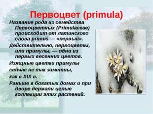 Первоцвет(primula) Название рода из семейства Первоцветных (Primulaceae) про