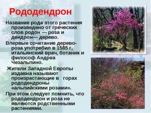 Рододендрон Название рода этого растения произведено от греческих слов родон