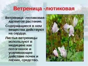 Ветреница -лютиковая Ветреница -лютиковая- ядовитое растение. Содержащиеся в