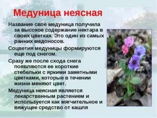 Медуница неясная Название свое медуница получила за высокое содержание нектар