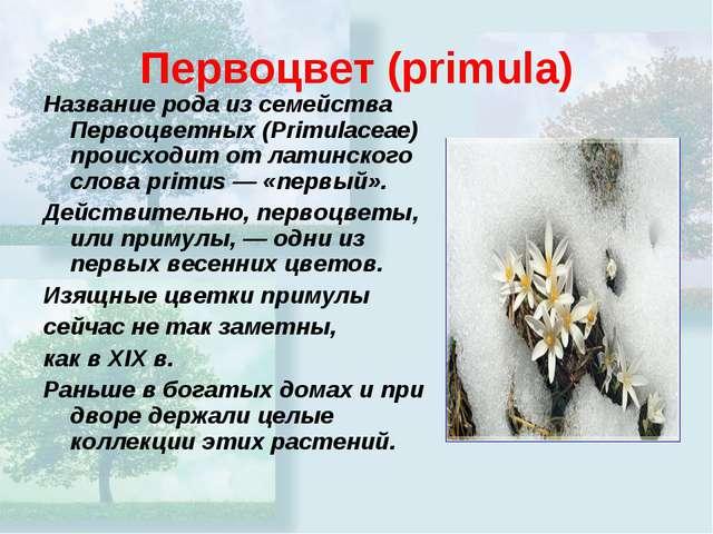 Первоцвет(primula) Название рода из семейства Первоцветных (Primulaceae) про...