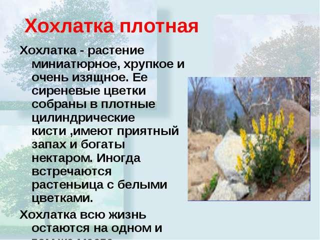 Хохлатка плотная Хохлатка - растение миниатюрное, хрупкое и очень изящное. Ее...
