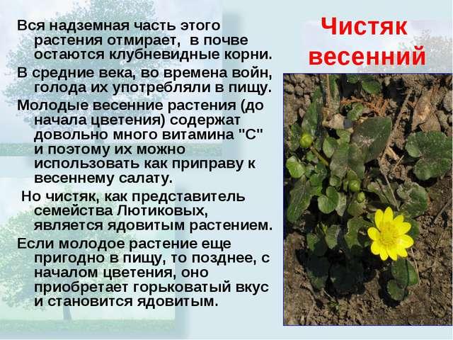 Чистяк весенний Вся надземная часть этого растения отмирает, в почве остаются...