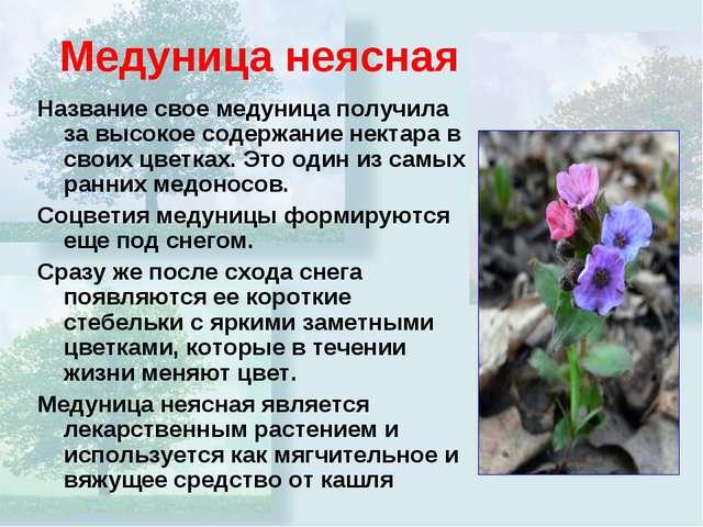 Медуница неясная Название свое медуница получила за высокое содержание нектар...