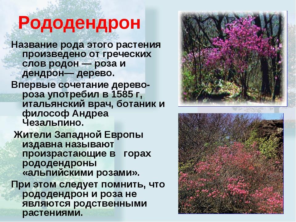 Рододендрон Название рода этого растения произведено от греческих слов родон...