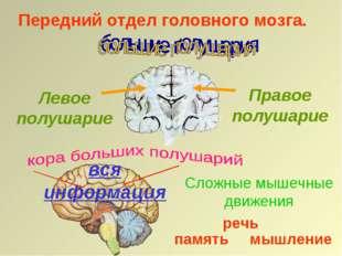 Передний отдел головного мозга. Правое полушарие Левое полушарие вся информац