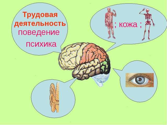 поведение психика ; кожа ; Трудовая деятельность