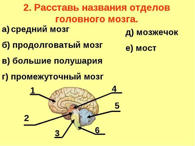 2. Расставь названия отделов головного мозга. а) средний мозг б) продолговаты...