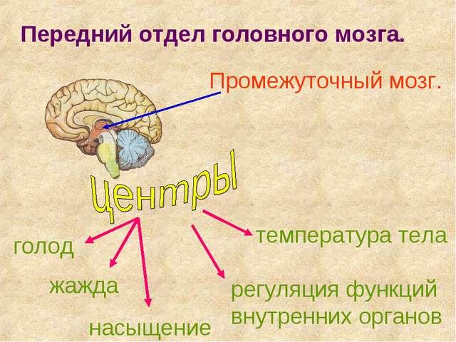 Передний отдел головного мозга. Промежуточный мозг. голод жажда насыщение тем...