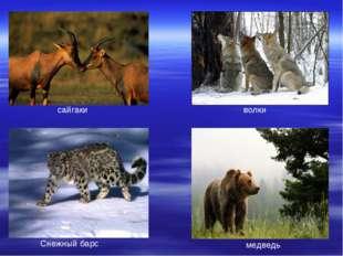 сайгаки волки Снежный барс медведь
