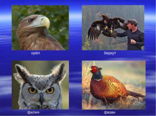 орёл беркут филин фазан