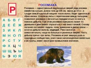 Р Росомаха — единственный вид хищных зверей рода росомах семейства куньих. Дл