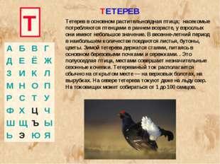 Т ТЕТЕРЕВ Тетерев в основном растительноядная птица; насекомые потребляются п
