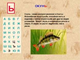Ь Окунь - самая распространенная в Ханты-Мансийском округе рыба, способная жи