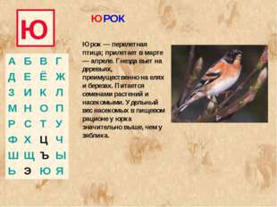 Ю Юрок — перелетная птица; прилетает в марте — апреле. Гнезда вьет на деревья