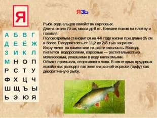Я Рыба рода ельцов семейства карповых. Длина около 70 см, масса до 8 кг. Внеш