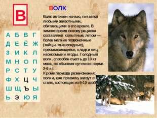 В Волк активен ночью, питается любыми животными, обитающими в его ареале. В з