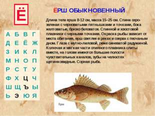 Ё Длина тела ерша 8-12 см, масса 15–25 см. Спина серо-зеленая с черноватыми п