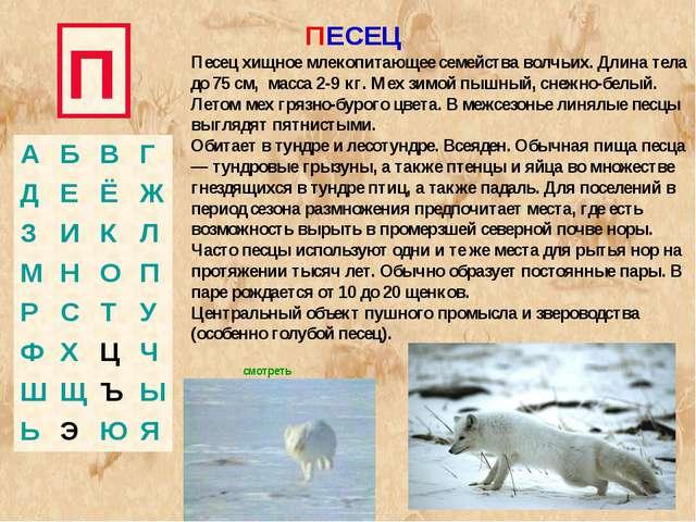 П ПЕСЕЦ Песец хищное млекопитающее семейства волчьих. Длина тела до 75 см, ма...