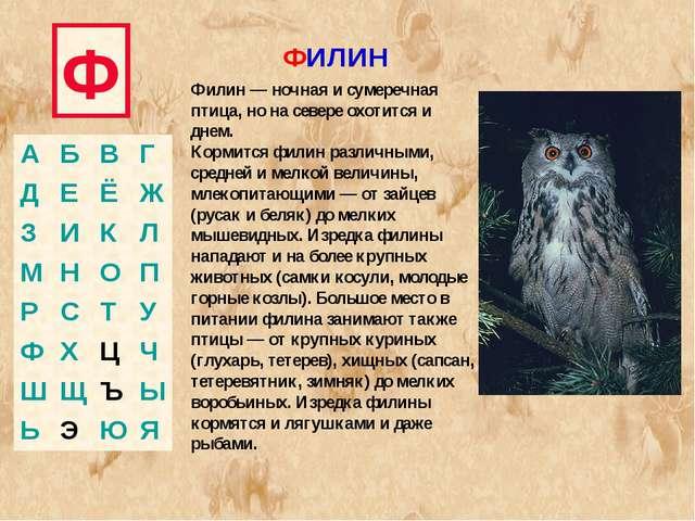 Ф ФИЛИН Филин — ночная и сумеречная птица, но на севере охотится и днем. Корм...