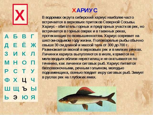 Х В водоемах округа сибирский хариус наиболее часто встречается в верховьях п...