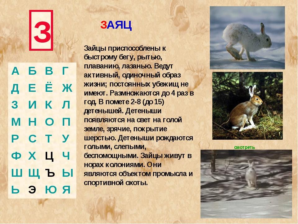 З Зайцы приспособлены к быстрому бегу, рытью, плаванию, лазанью. Ведут активн...