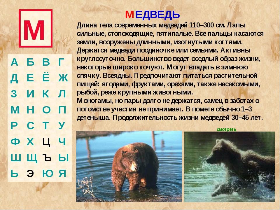 М МЕДВЕДЬ Длина тела современных медведей 110–300 см. Лапы сильные, стопоходя...