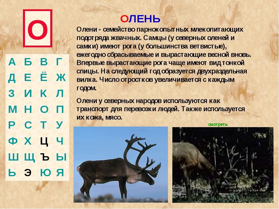 О ОЛЕНЬ Олени - семейство парнокопытных млекопитающих подотряда жвачных. Самц...