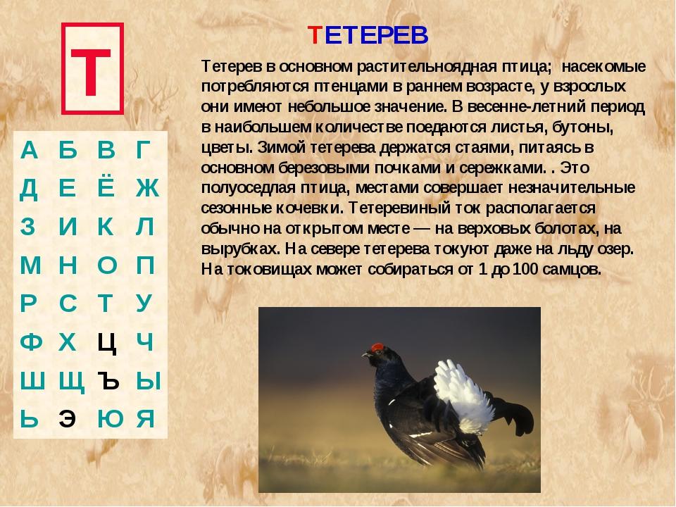 Т ТЕТЕРЕВ Тетерев в основном растительноядная птица; насекомые потребляются п...