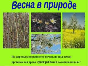 Тимошенко М.А. * На деревьях появляются почки, из-под земли пробивается трава
