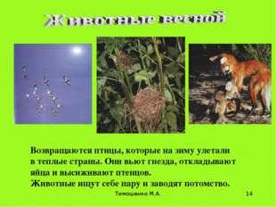 Тимошенко М.А. * Возвращаются птицы, которые на зиму улетали в теплые страны.