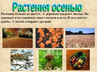 Тимошенко М.А. * Растения больше не цветут. С деревьев опадают листья. На дер