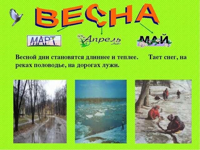 Тимошенко М.А. * Весной дни становятся длиннее и теплее. Тает снег, на реках...