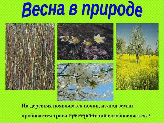 Тимошенко М.А. * На деревьях появляются почки, из-под земли пробивается трава...