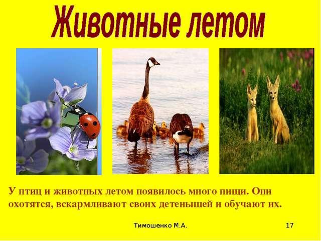 Тимошенко М.А. * У птиц и животных летом появилось много пищи. Они охотятся,...