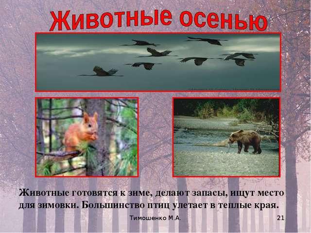 Тимошенко М.А. * Животные готовятся к зиме, делают запасы, ищут место для зим...