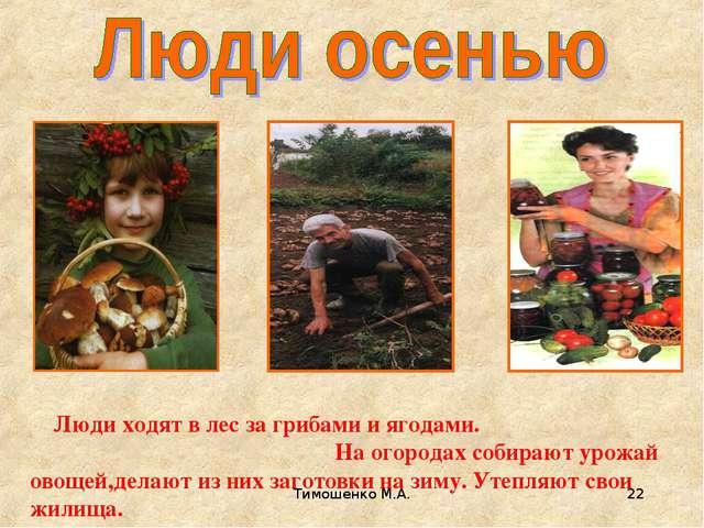 Тимошенко М.А. * Люди ходят в лес за грибами и ягодами. На огородах собирают...
